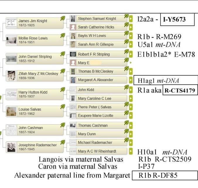 01a Copy of cherie known dna haplogroups