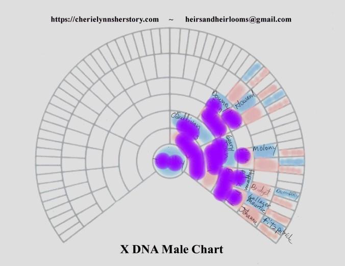 O 1 X-DNA