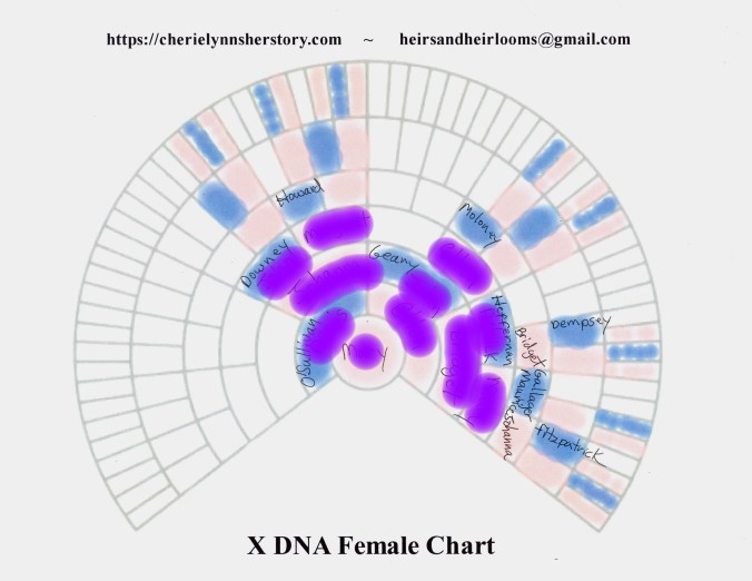 O 2 X-DNA
