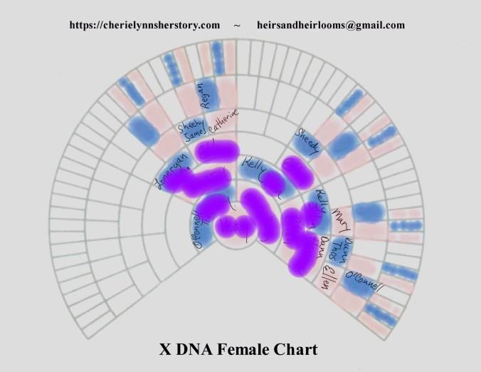 O 3 X-DNA